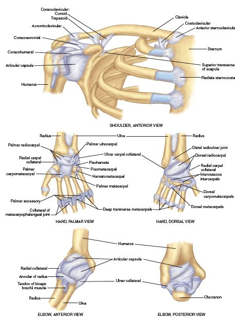 elbow diagram ligaments elbow bones elsavadorla